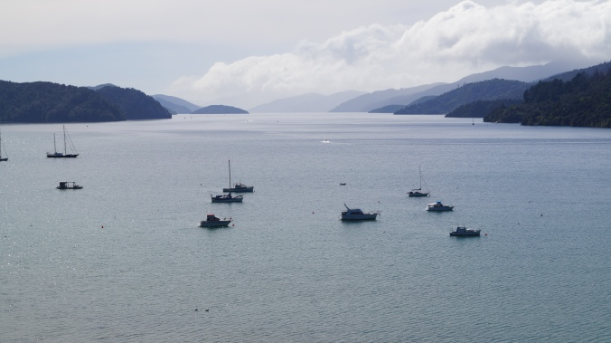 Queen Charlotte Sound, looking north-east towards Picton.