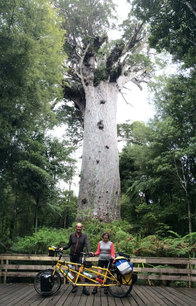 Mark and Jutta at Tane Mahuta, New Zealand's largest surviving Kauri tree and some 2000 years old.