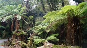 Jutta's gorgeous picture of NZ's stunning ferns. No wonder it's the national symbol.