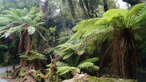 Jutta's gorgeous picture of NZ's stunning ferns. No wonder it's the national symbol.